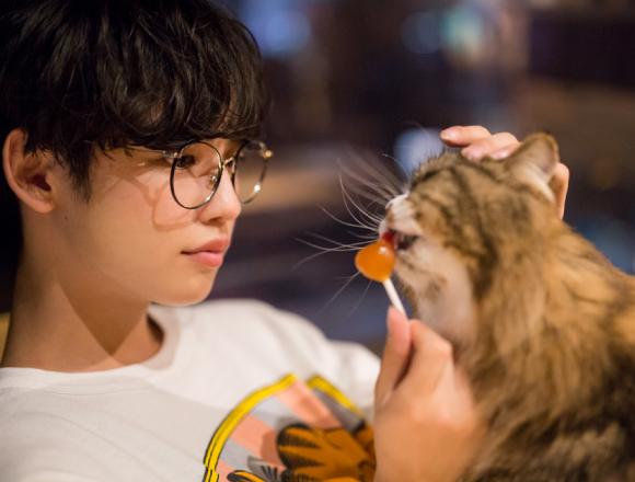 """【東京散步】在澀谷""""貓咪咖啡廳MoCHA""""跟優太郎悠閒約會 優太郎、東京散歩、澀谷、貓、"""