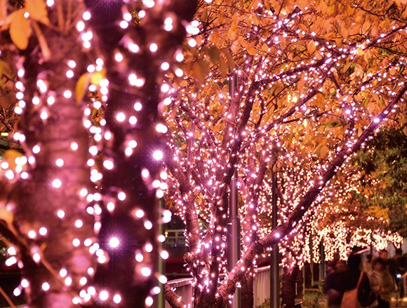 """沿著目黑川的""""冬之櫻®"""" 粉色燈展也將在2017年登場 在目黑川、聖誕節、聖誕點燈、"""