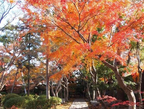 三重・桑名市「諸戸氏庭園」秋季開放開跑。就到楓葉的庭園散步吧 在三重、庭園、楓葉、