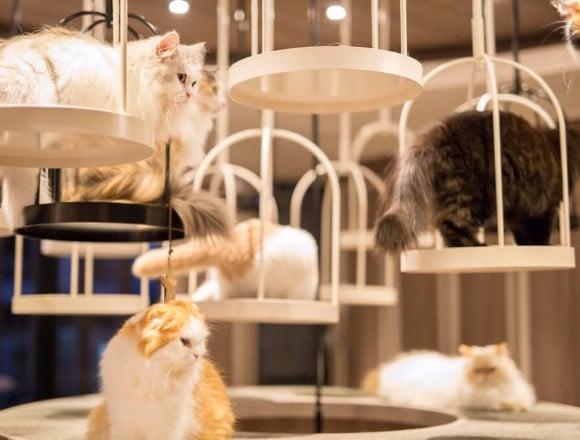 貓・兔子・松鼠猴・爬蟲類等!東京都内的7間動物咖啡廳介紹 動物咖啡廳、咖啡廳、