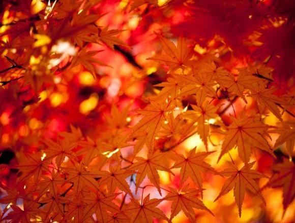 被大自然包圍的非日常體驗 日本東北的6個推薦賞楓景點 楓葉、