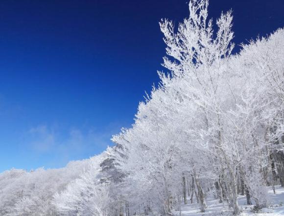 享受從露天溫泉放眼望去的雪景及樹冰 大分「星野集團 界 阿蘇」 在大分、溫泉、