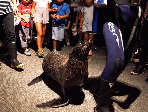 有關生肖的動物們向大家恭賀新禧的新年活動 於墨田水族館舉辦