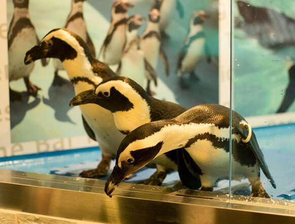 小寶寶誕生!「有企鵝的酒吧 池袋」聖誕節、尾牙・春酒方案 動物咖啡廳、在池袋、酒吧、餐廳、