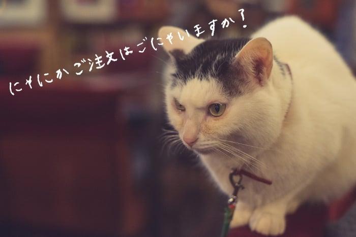 mmw_kissa04_02