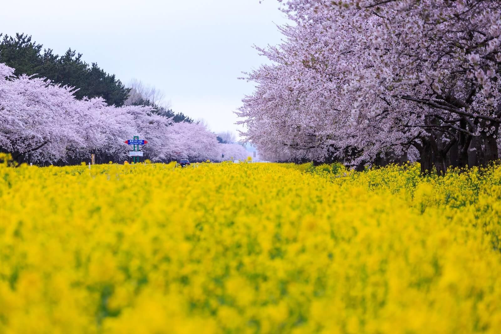 享受日本的春天吧!日本於3月、4月、5月舉辦的祭典・活動整理 道.日本傳統文化、