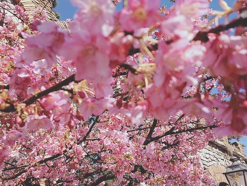 能夠在5分鐘內從各個車站抵達!交通方便的6個東京人氣賞花景點 在東京、櫻、