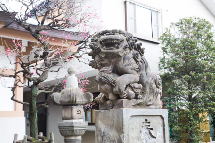 東京さんぽ 原宿・隠田神社 エリー