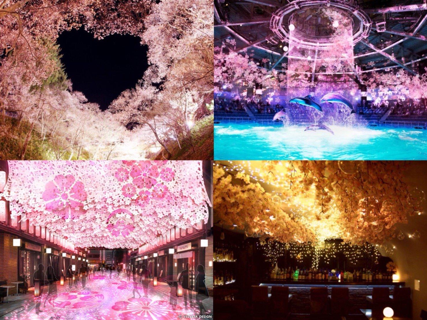 從每年慣例的櫻花祭到科技賞櫻都有!?2018日本賞櫻活動6選 在東京、櫻、