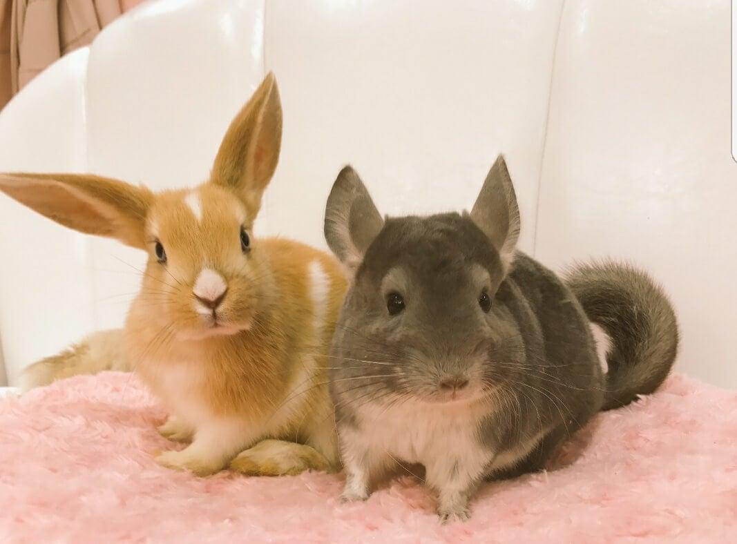貓咪、兔子、刺蝟!室內動物園「Animo」將於大阪・堀江開幕 在大阪、