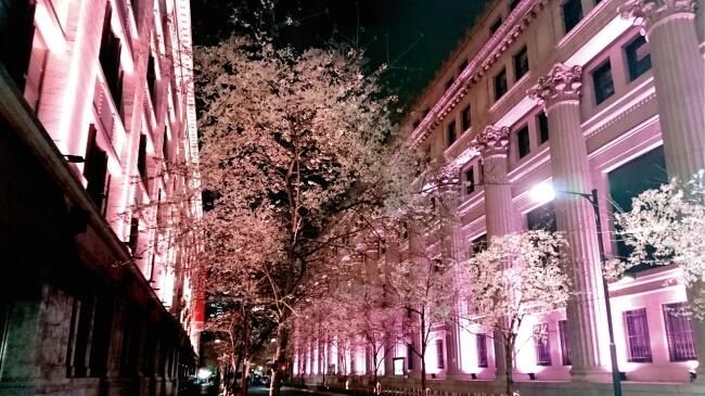日本橋 江戸桜祭り