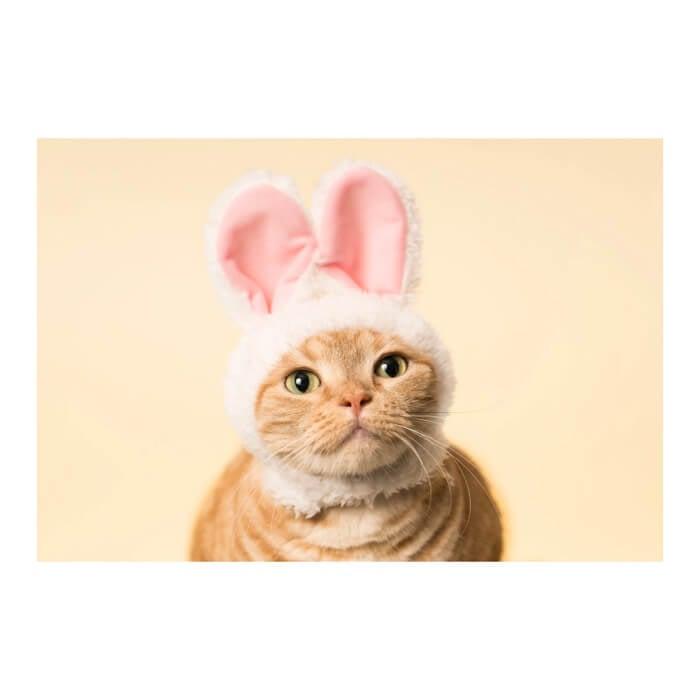 聯名主題咖啡廳「貓咪食堂(ねこのごはんやさん)」於原宿・竹下通登場 咖啡廳、原宿、貓咪食堂、貓咪頭套