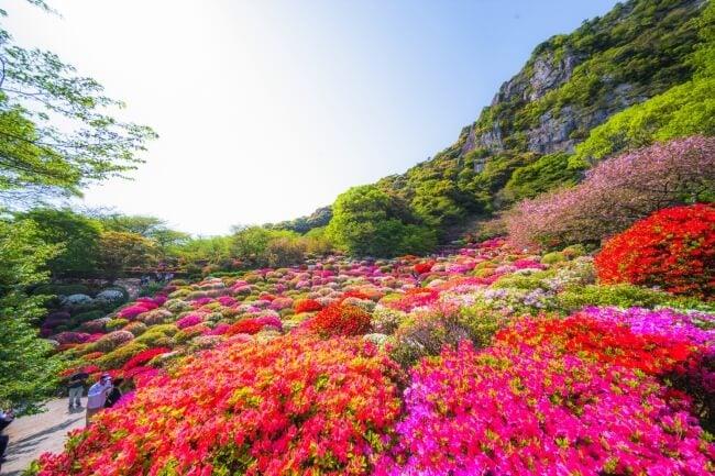 迎來20萬朵杜鵑花的花期!春季活動 佐賀「御船山樂園 花祭」舉辦 在佐賀、