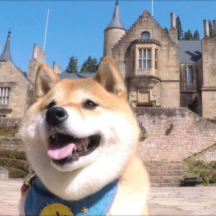 柴犬・ハナの旅行動画公開3