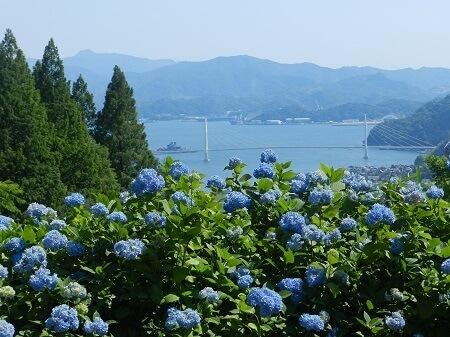 舞鶴自然文化園 アジサイまつり あじさい 絶景