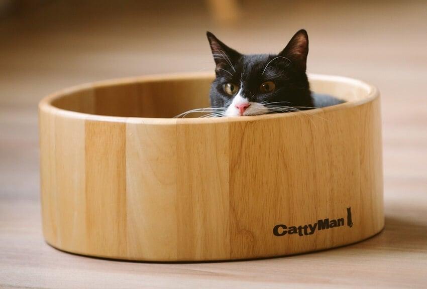 在浮世繪的世界裡跟貓咪玩耍!江戶版貓咪咖啡廳・兩國「江戶貓茶屋」 兩國、貓、