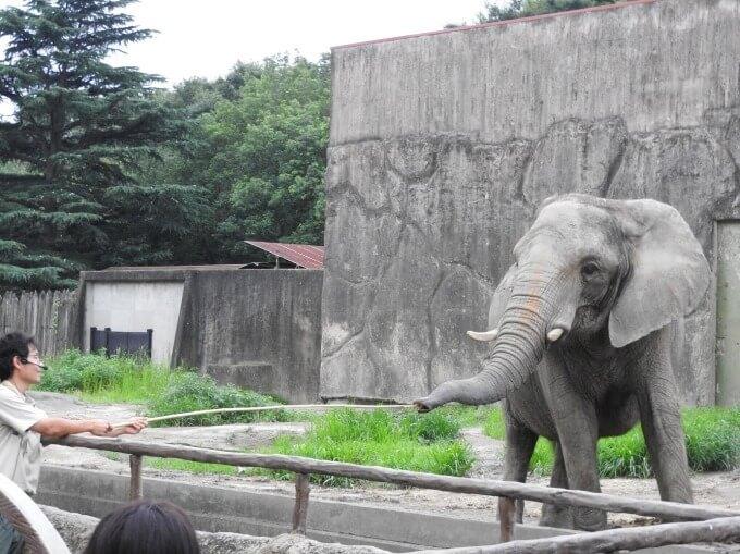 夏季夜間活動「SUMMER NIGHT ZOO」將於埼玉縣・東武動物公園舉辦 在埼玉、