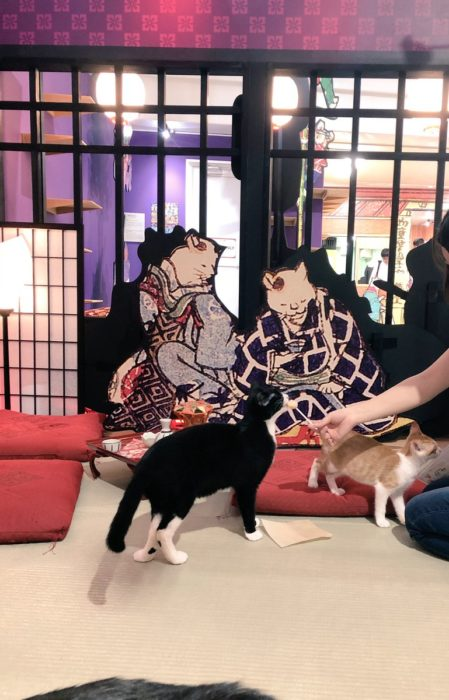 江戸貓咪茶屋與貓玩耍