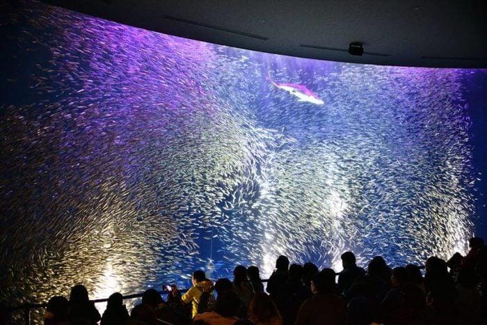 名古屋港水族館室內