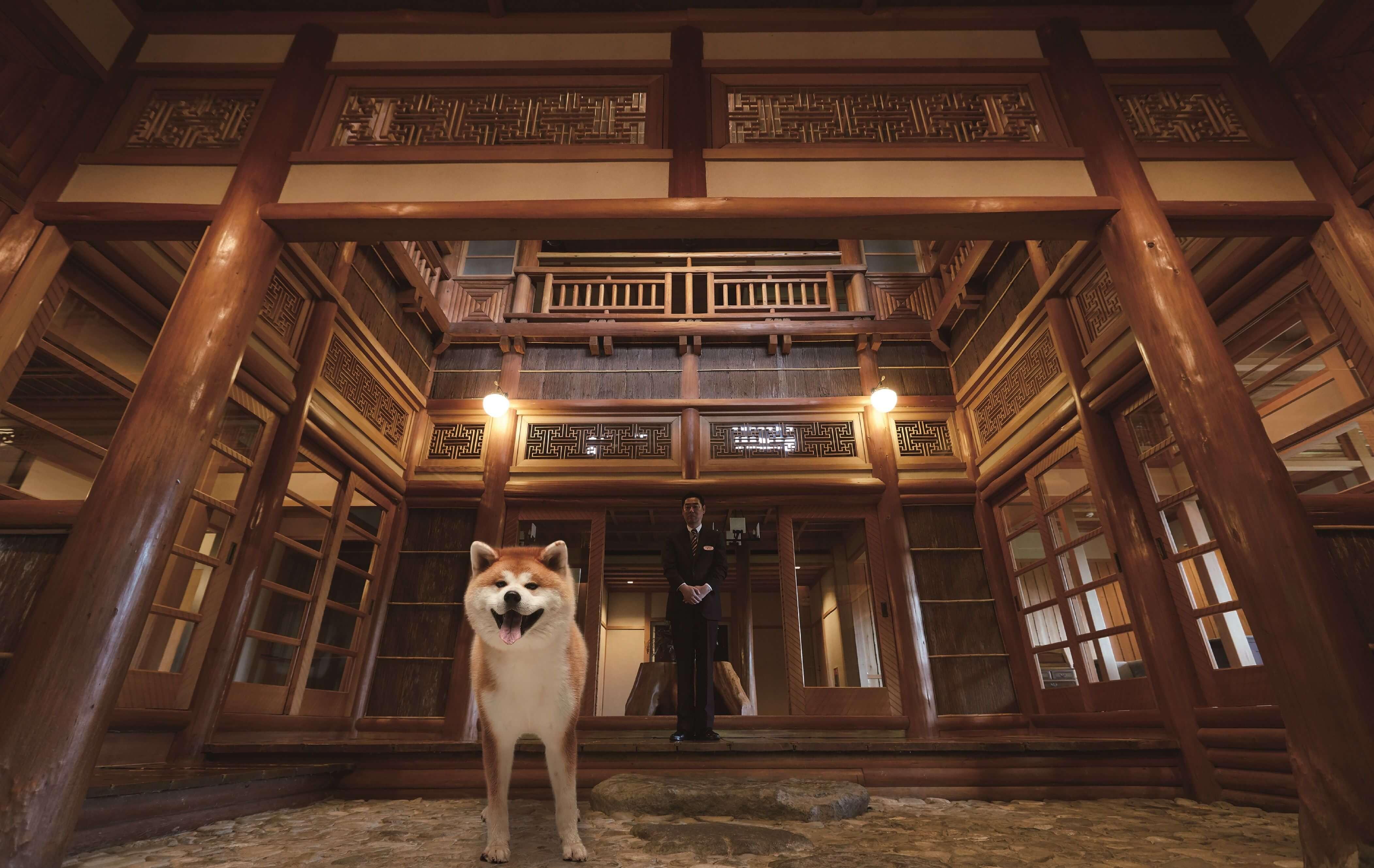 秋田犬「Akita」要來傳遞秋田魅力囉!攻佔澀谷交通廣告 日本旅行、日本觀光、澀谷、