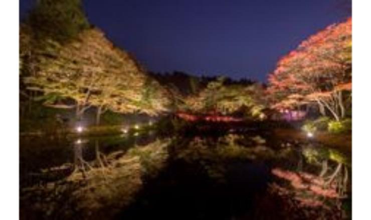 享受被照亮的紅葉!漫步欣賞晚上的神戶六甲高山植物園的紅葉 燈飾、紅葉_、