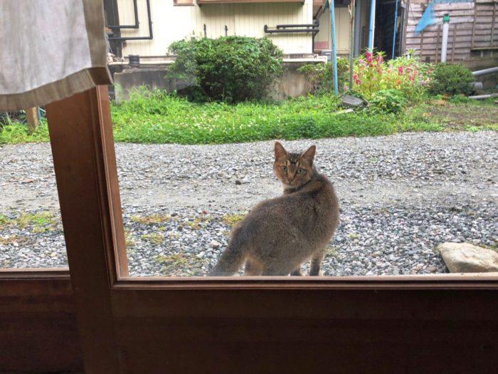 SARUYA隔壁的貓