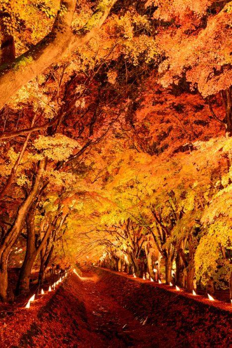 紅葉迴廊夜間點燈