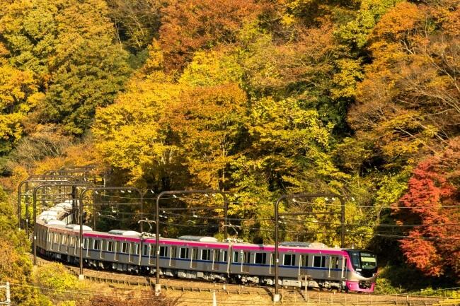 高尾山紅葉季到来!由高尾山出發的臨時指定列車「Mt.TAKAO號」開始運行 日本旅行、日本觀光、高尾山_、