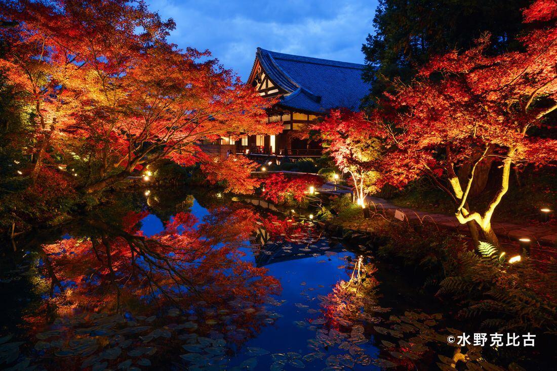 有著「爆炸頭地蔵」話題性的京都・金戒光明寺「紅葉點燈」參拜計畫開始 京都、紅葉_、