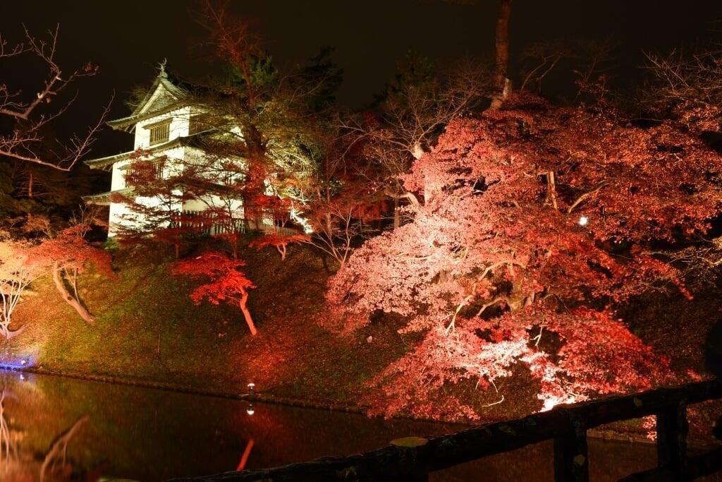 紅葉點燈活動!青森縣舉辦「弘前城 菊與紅葉祭典」 在青森、楓葉、