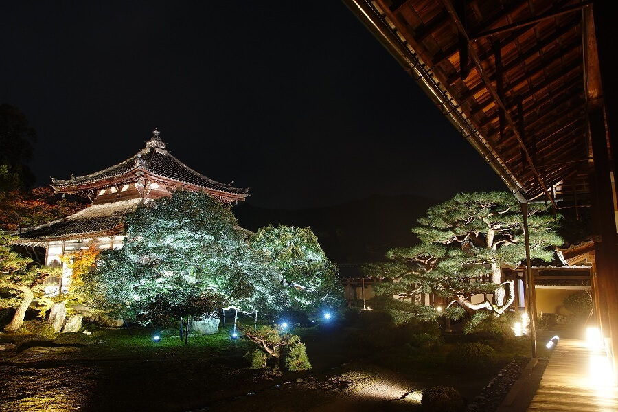京都人氣觀光景點「鹿王院」實施夜間特別參觀活動 在京都、日本觀光、