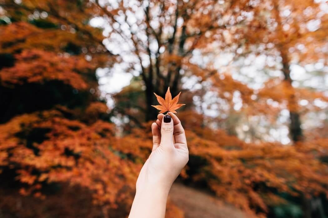 秋天出門郊遊!從東京都心可以到達的推薦紅葉地點7選 日本觀光、紅葉_、