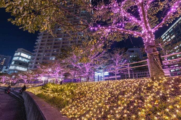 以櫻花聞名的目黑川 舉辦粉紅冬季彩燈活動 燈飾、目黑、