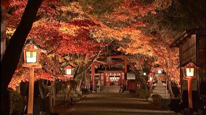 京都大原野神社舉辦首次紅葉夜間點燈活動 在京都、燈飾、