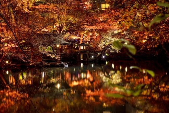 八芳園日本庭園 舉辦照亮紅葉活動「TOKYO RED GARDEN 2018」 紅葉_、