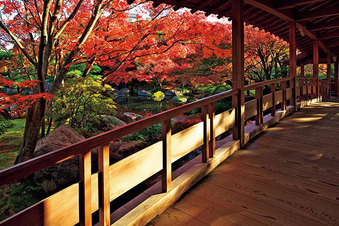 關西攻略紅葉景點20選_姬路姫路城西御屋敷跡庭園 好古園