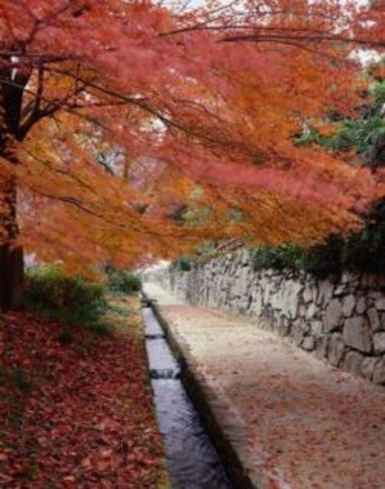 關西攻略紅葉景點20選_比叡山延曆寺