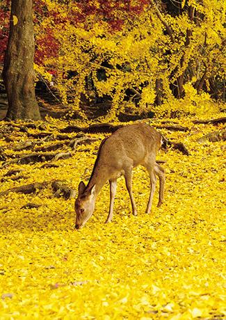 關西攻略紅葉景點20選_奈良公園