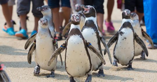 長崎旅遊推薦觀光景點_長崎企鵝水族館