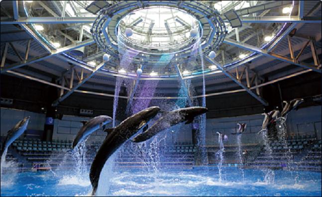 「SNOW AQUARIUM」海豚秀