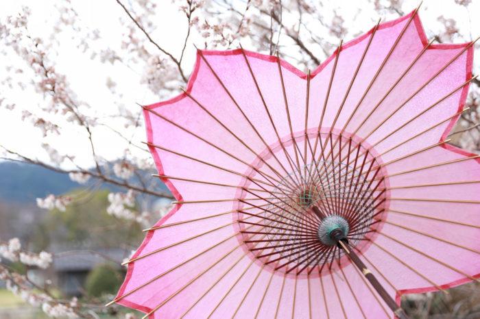 傘日和_kasabiyori_sakurakasa_櫻和傘