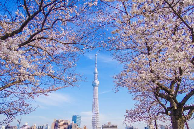 2020年春季10大【東京】人氣賞櫻景點